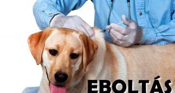 Eboltás Baracson 2018
