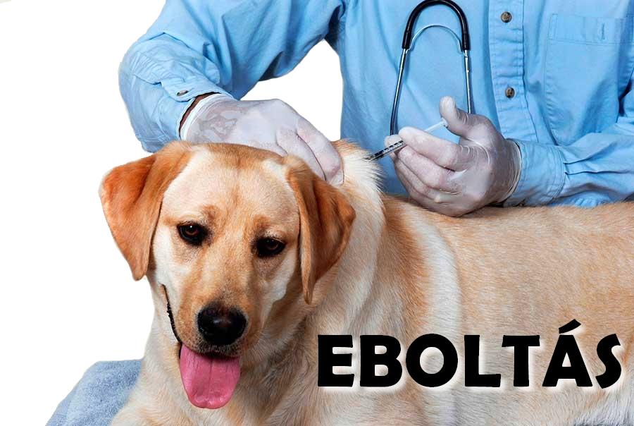 Az idei kötelező eboltásról