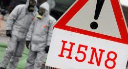 Tájékoztatás madárinfluenzával, afrikai sertéspestissel kapcsolatban